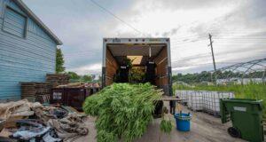 صورة للشرطة في شاحنة محملة بالحشيش بعد أن صادرت شرطة يورك 150 مليون دولار من الحشيش والأسلحة في عملية ضبط مخدرات
